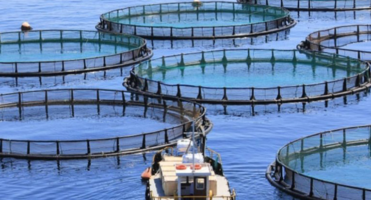 Igiene e controllo dei prodotti della pesca e dell'acquacoltura