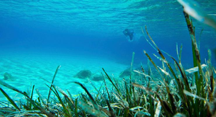 Tutela dai rischi in ambiente marino